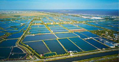 Shrimp farming in Vietnam and CodeIT