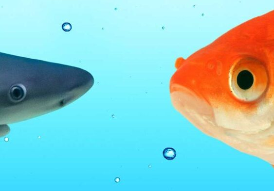 Combatting-Seafood-Fraud.00_00_00_00